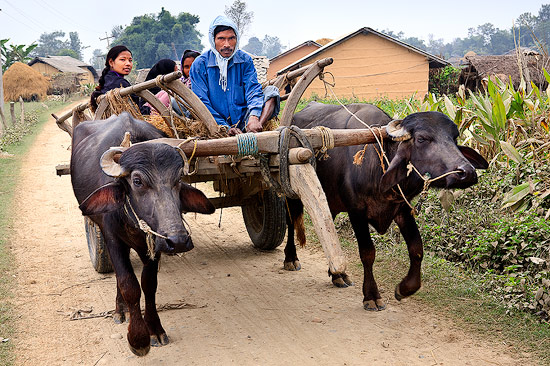 Bullock Cart in Thakurdwara, Nepal