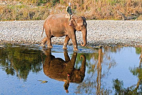 Elephant and Mahout, Bardia National Park, Nepal