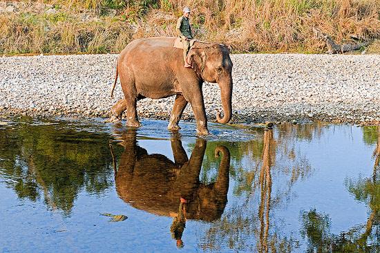 Elephant and Mahout, Bardia National Park, Nepal
