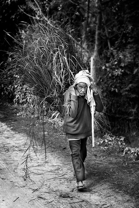 Old Man, Carrying Grass, in Thakurdwara, Nepal